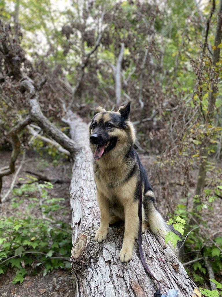 hiking with dog